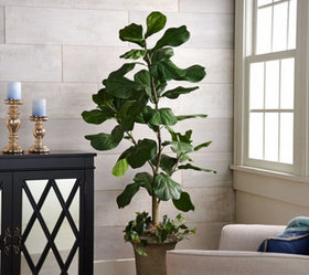 """As Is"" 5' Potted Fiddle Leaf Tree in Pot by Valer"