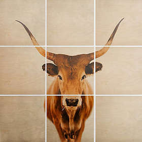 Deny Designs 9-Piece Cow Square Wood Wall Art in B