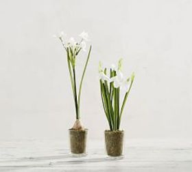Pottery Barn Faux Potted Paperwhites in Glass Vase