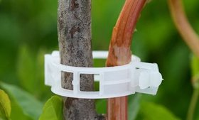 50/100Pcs Plant Support Clips for Garden Vine to G