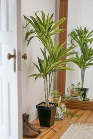 Dracena 4 ft Metal Potted Faux Tree